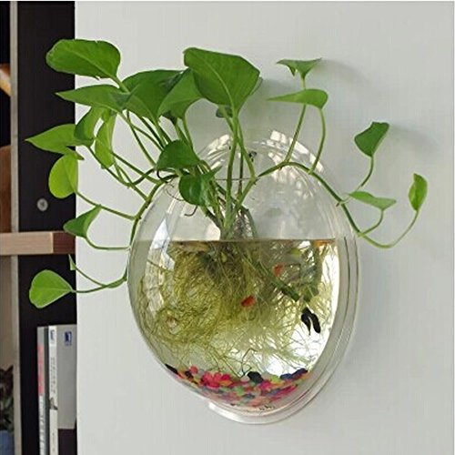 kathson Wall Fish Bowl Acrylic Hanging Aquarium Wall Mounted Bubble Beta Fish Planter Aquaponic Flower Tank Home Decoration Plant Pot (7.6in)