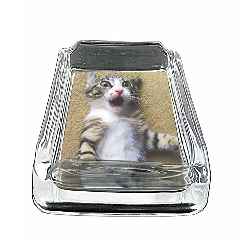 Funny Animal Faces S12 Glass Square Ashtray 4''x3'' Sturdy Cigarette Smoking Bar by JS & Caren