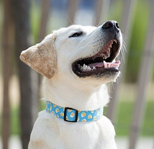 Heart Breaker Collar for Pets Size Extra Large 1.5 Inch Wide and 17-25 Inches Long Hand Made Dog Collar by Oh My Pawd