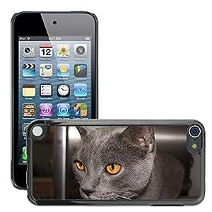 Etui Housse Coque de Protection Cover Rigide pour // M00114024 Gato Hangover gris Gato doméstico // Apple ipod Touch 5 5G 5th