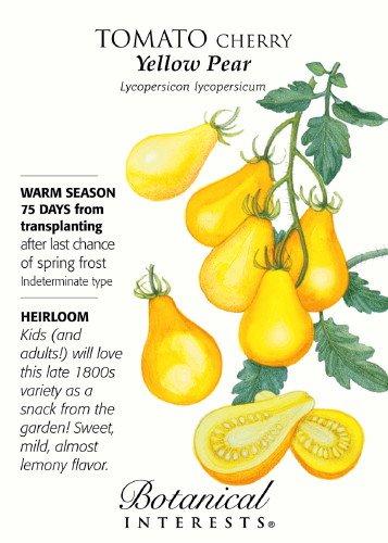 3 X Very Healthy Yellow PEAR Tomato Plug Plants
