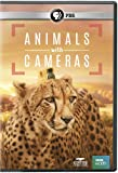 Buy NATURE: Animals With Cameras DVD