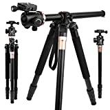 360°Horizontal rotation Professional Travel Camera Tripod, Portable Projector Stand with 360°Panorama Ball Head,1/4 Quick Release Plate and Bubble Level for Canon Nikon Sony Olympus Fuji Projector D
