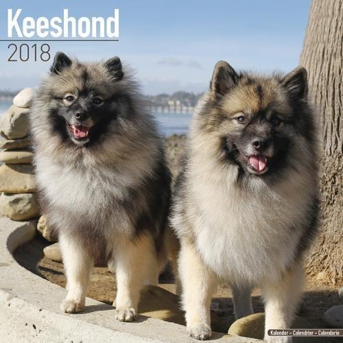 Keeshond Calendar - Dog Breed Calendars - 2017 - 2018 wall Calendars - 16 Month by Avonside