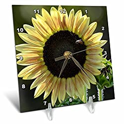 3dRose dc_63614_1 Perfect Summer Sunflower-Flowers-Photography-Desk Clock, 6 by 6-Inch