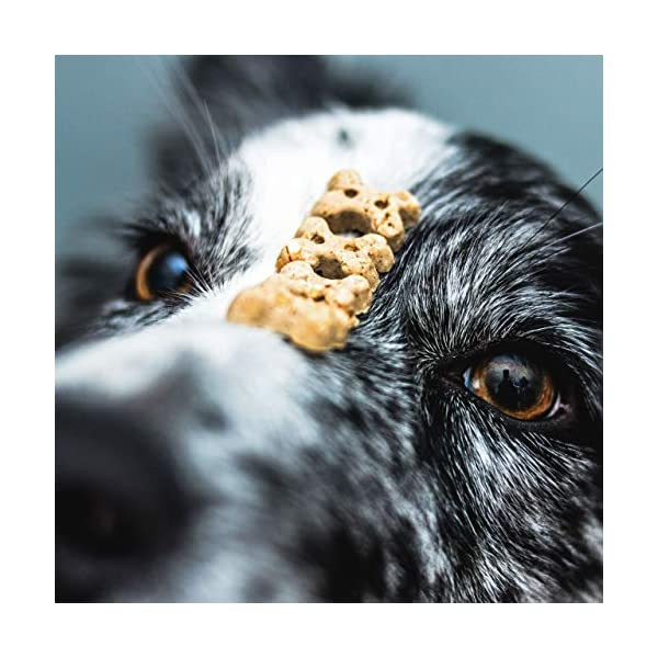 Pooch and Mutt Calm and Relaxed Mini-Bone Dog Treats 4