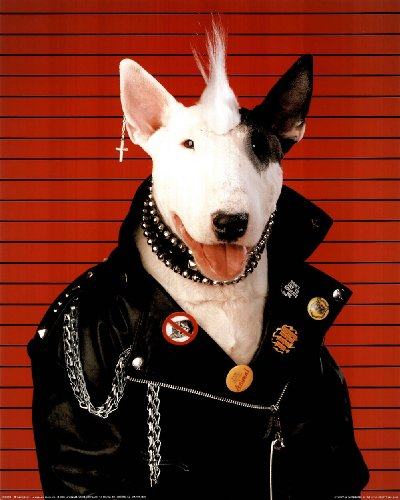 amazon com punk dog bull terrier art print poster spuds mackenzie