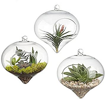 Pack Of 3 Glass Hanging Planters Hanging Air Plant Terrariums