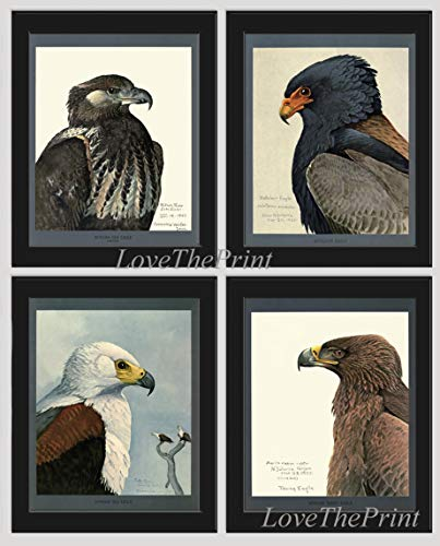 (Eagle Wall Art Pint Set of 4 Prints African Sea Bateleur Tawn Eagle Home Room Decor Wall Art Forest Field Country Nature Fauna Natural Science LoveThePrint Unframed)