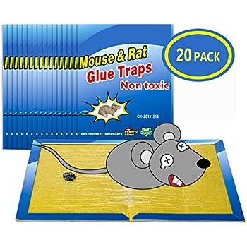 Amazon Com Mouse Trap Mice Rat Glue Traps Peanut