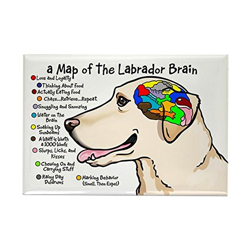 - CafePress Yellow Lab Brain Rectangle Magnet, 2