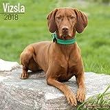 Vizsla Calendar - Dog Breed Calendars - 2017 - 2018 wall Calendars - 16 Month by Avonside