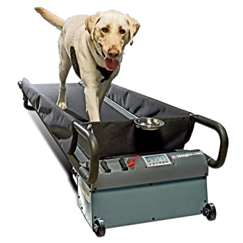 Top Dog Treadmills