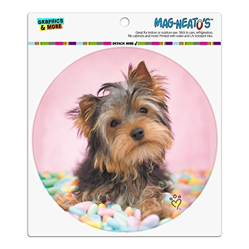 Graphics and More Yorkie Yorkshire Terrier Dog Candy Eggs Ea