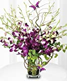 Deluxe Dendrobium Orchid Vase by Allen's Flower Market - Fresh Flowers Hand Delivered - Los Angeles Area