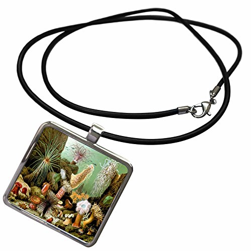 - 3dRose Sea Life Vintage - Image of Vintage Painting Of Sea life And Urchins - Necklace With Rectangle Pendant (ncl_256311_1)