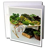 3dRose TDSwhite – Farm and Food - Food Lettuce Assortment Healthy Greens - 6 Greeting Cards with Envelopes (gc_285160_1)