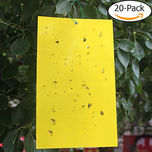 Trapro 20-Pack Dual-Sided Yellow Sticky Traps for Flying Plant Insect Like Fungus Gnats, Aphids, Whiteflies, Leafminers - (6x8 Inches, Twist Ties Included) (Maggot Apple Trap)