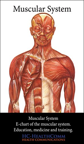 Muscular System Chart (Muscular System, e-chart.: The more complete Muscular System)