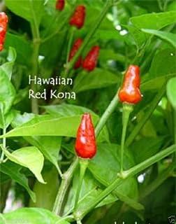 25 Premium American Heirloom Texas Chiltepin Hot Pepper Seeds-W 050