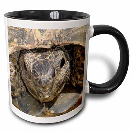3dRose Taiche Photography Tortoises mug 46674 4