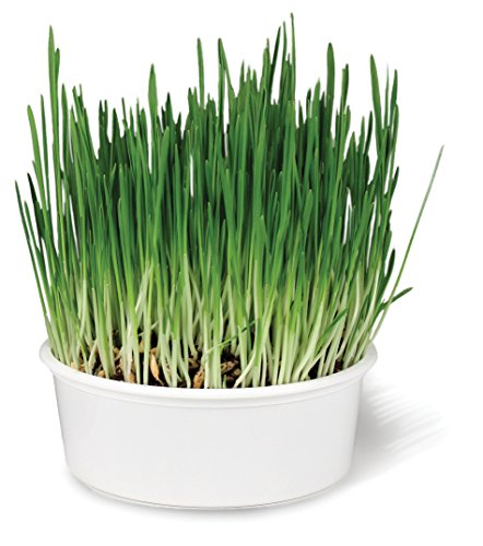 SmartyKat-Sweet-Greens-Cat-Grass-Kit