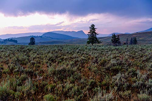 Western Photography Wall Art Print - Picture of Valley Floor and Rainy Sky at Tower Junction in Northern Yellowstone Rocky Mountain Decor 5x7 to 40x60