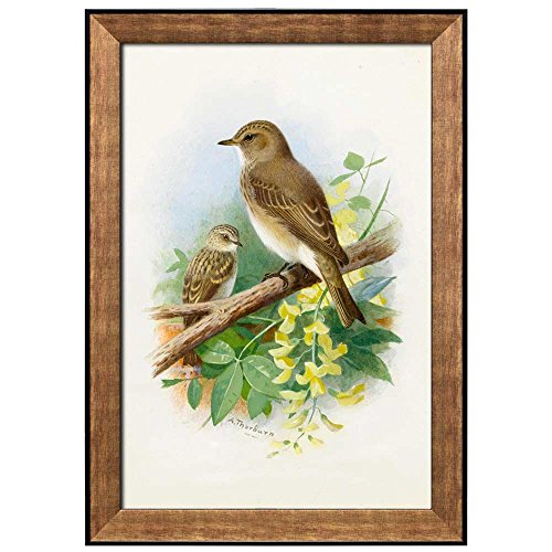 Illustration of 2 Birds Perched onto a Tree Branch by Archibald Thorburn Framed Art
