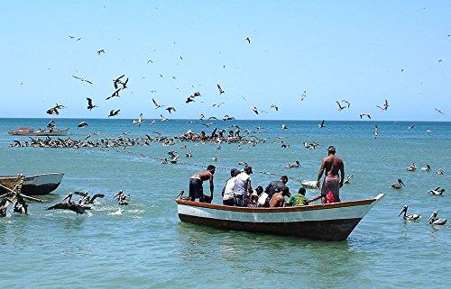 Home Comforts LAMINATED POSTER Sea Daisy Boat Fishing I Boat Bay Landscape Poster 24x16 Adhesive ()