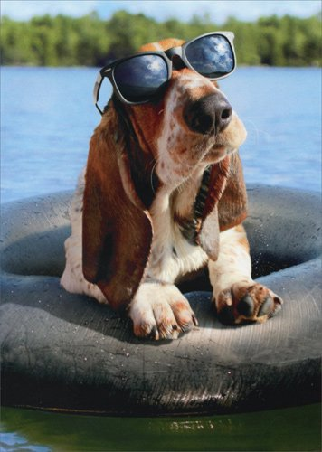 Basset Hound Wearing Sunglasses - Avanti Funny Dog Birthday Card