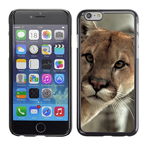 Premio Sottile Slim Cassa Custodia Case Cover Shell // V00002836 un couguar vigilant // Apple iPhone 6 6S 6G PLUS 5.5""