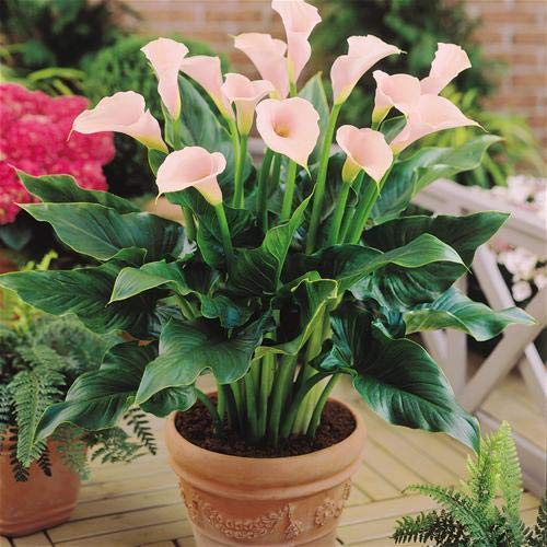 Trothic Gardens Indoor Live Plant From K Buy Online In India At Desertcart
