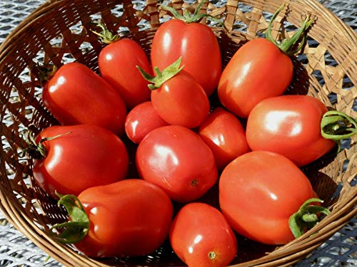 Seeds - Roma VFN Tomato Seeds- 300+ by TricaStore