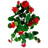 "23"" Geranium Hanging Bush(Pack of 6)"