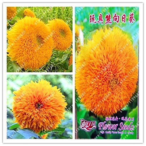 Seed Original Package-True Teddy Bear Sun Dwarf Stem Double Sun Indoor Bonsai for Home Garden ()
