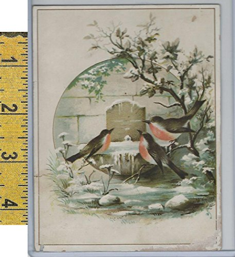 (Victorian Card, 1890's, Birds, Snow, Robins, Window (A2))