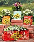 Set of 4 Sunflower Box Planter Flower Pot Plant Holder Decor Garden Yard Decoration