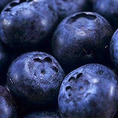 100 Seeds/Pack Blueberry Seeds Bonsai Edible Fruit Seed, Indoor, Outdoor Available : Garden & Outdoor