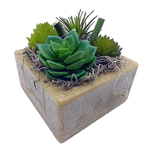 Habersham Candle Co.Prickly Pear and Aloe Succulent GEO Cube Candle ()