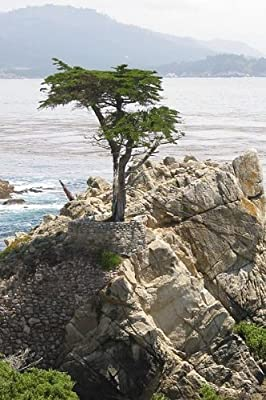 Seeds and Things 10 Monterey cypress tree Seeds Great Bonsia