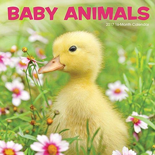 Summit Avalon Calendar Animals 82362