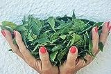 Neem Queen Tea Bags (30 CT) 100% Pure Fresh