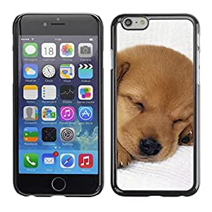 PC/Aluminum Funda Carcasa protectora para Apple Iphone 6 Puppy Labrador Retriever Light Brown Dog / JUSTGO PHONE PROTECTOR