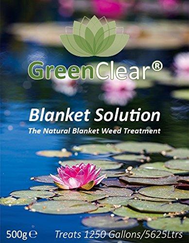 Manta verde transparente con la solución de su respuesta a ...