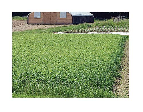Mix Crop - David's Garden Seeds Cover Crop Green Manure Spring XE9967 (Green) Organic One Pound Package
