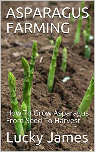 ASPARAGUS FARMING: How To Grow Asparagus From Seed To Harvest