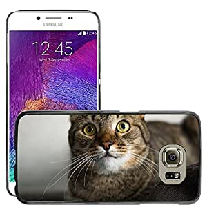 Super Stella Slim PC Hard Case Cover Skin Armor Shell Protection // M00146077 Cat Pet Cat'S Eye Cute Grey // Samsung Galaxy S6 (Not Fits S6 EDGE)