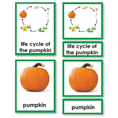 Pumpkin Life Cycle 3-Part Cards