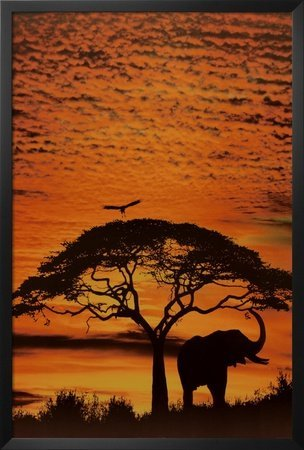 FRAMED African Skies (Elephants against an orange Sky by Jim