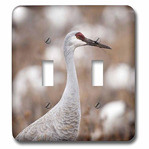 3dRose lsp_92926_2 Bosque Del Apache Nwr, Sandhill Crane Bird Us32 Rbr0006 Rick A. Brown Double Toggle (Crane Switchplate)